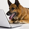 Need More Dog Training Information in San Diego?